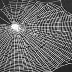 Lada Vukić:  U paukovoj mreži