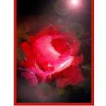 """Prikaz zbirke pjesama """"Eskimska ruža"""" Mensur Ćatić, u izdanju Udruge građana """"Bagrem"""", Gradište, (listopad/oktobar 2010)"""